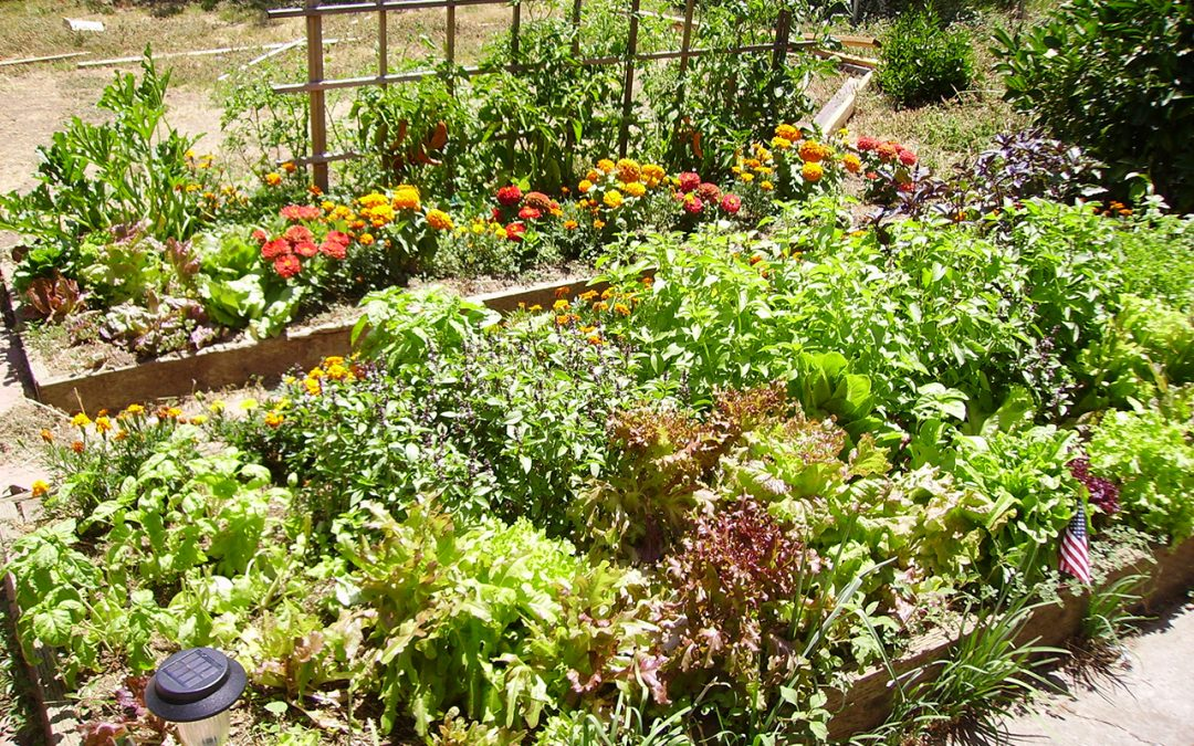 6 Gardening Tips for Beginners to Start Off Spring